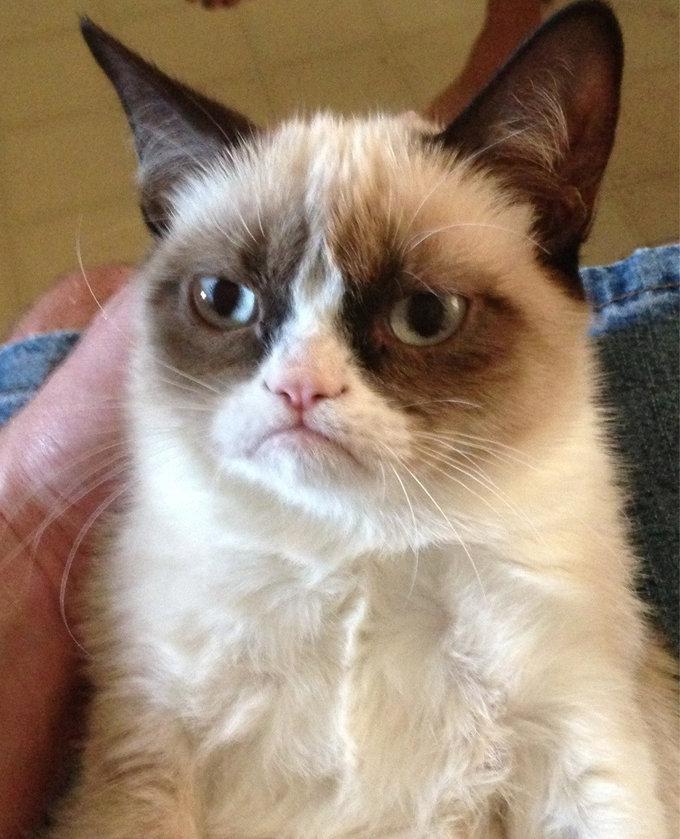<h2>Grumpy Cat</h2>